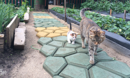 How to Build a Walkway with Plastic Path Maker Mold