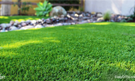 HOW TO START A NEW LAWN FROM SEED