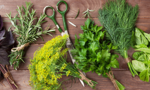 How to dry aromatic herbs